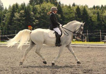 Reitstall-Diana-Gyri-Turnier-2013 (10)