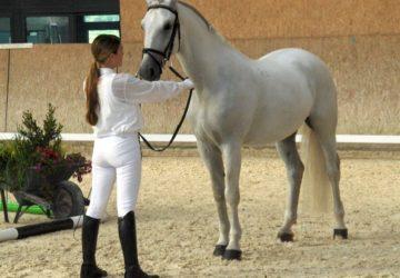 Reitstall-Diana-Lippizaner-Tag (20)