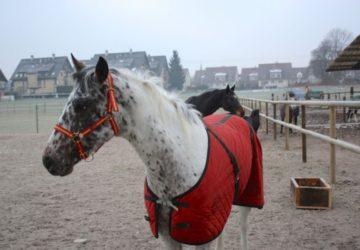 Reitstall-Diana-Pferde-im-Winter-auf-den-Schnitzelweiden (6)