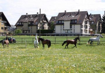 Reitstall-Diana-unsere-Pferde (26)