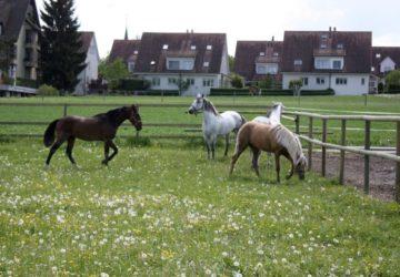 reitstall-diana-unsere-pferde-april-2012 (4)