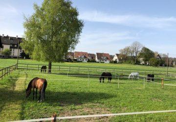 Reitstall-Diana-Unsere-Pferde-im-Fruehling-2019 (4)