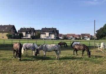 Reitstall-diana-Pferde-Wiese-2-2019
